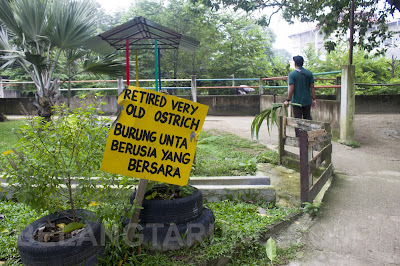 Zoo Burung Unta Retired
