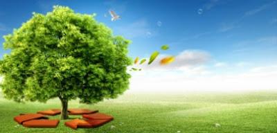 Arbol y ecologia