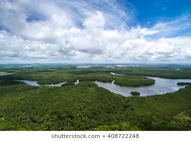 Arial view of Amazon Rainforest