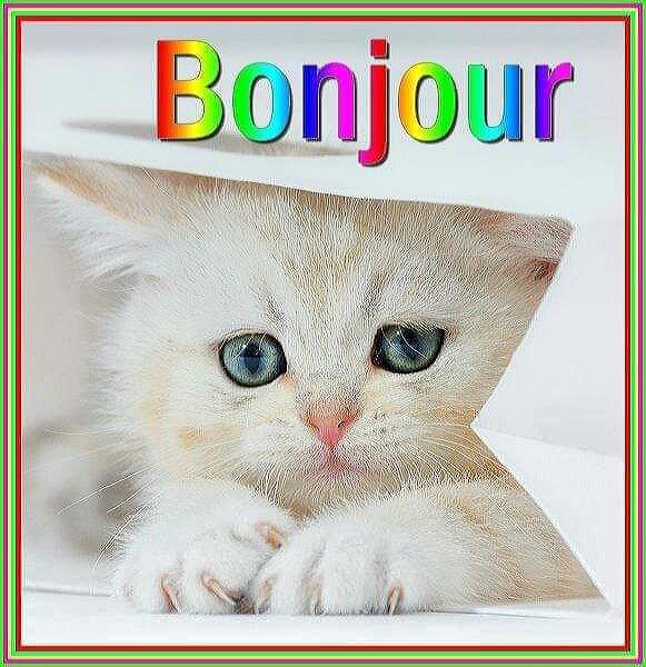 Les Petites Images D Amour Du Net Belle Image De Bonjour