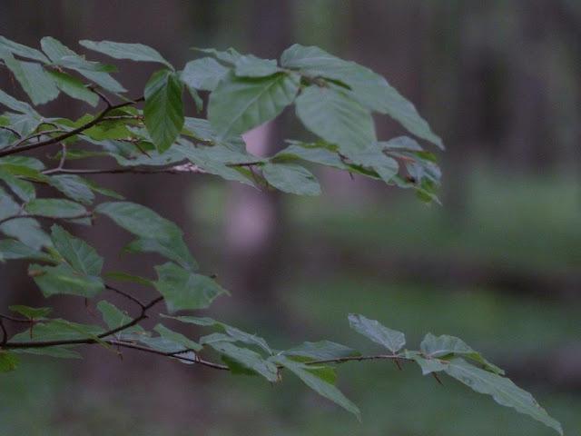 Wanderung Rundweg Bochum Ruhrgebiet Kopf frei bekommen Schritt für Schritt Wald Natur Depression Reizarm Entschleunigung Achtsamkeit Auszeit