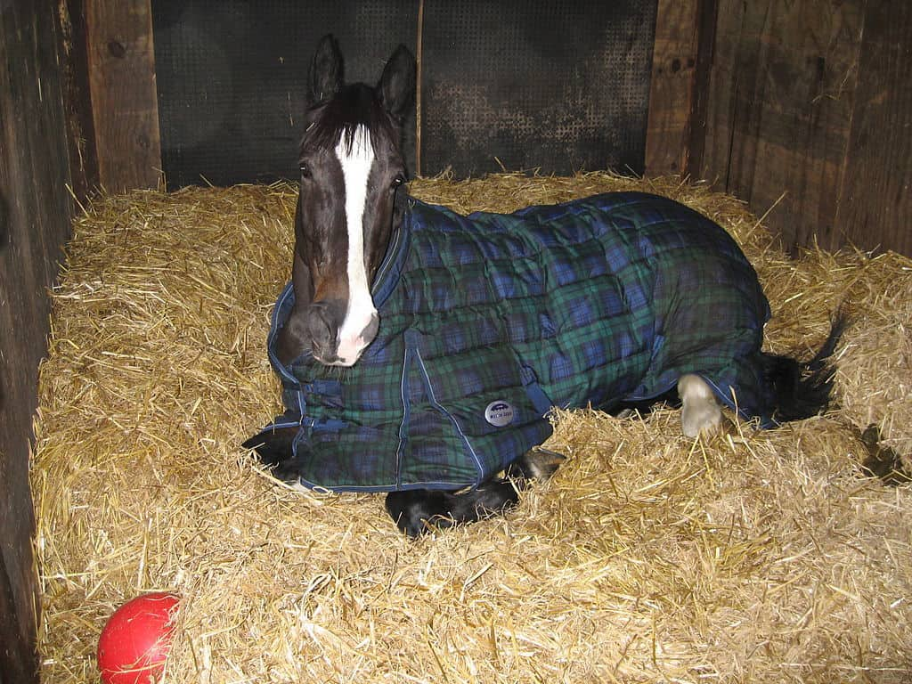 3 Reasons to Use a Properly Sized Horse Blanket or Rug