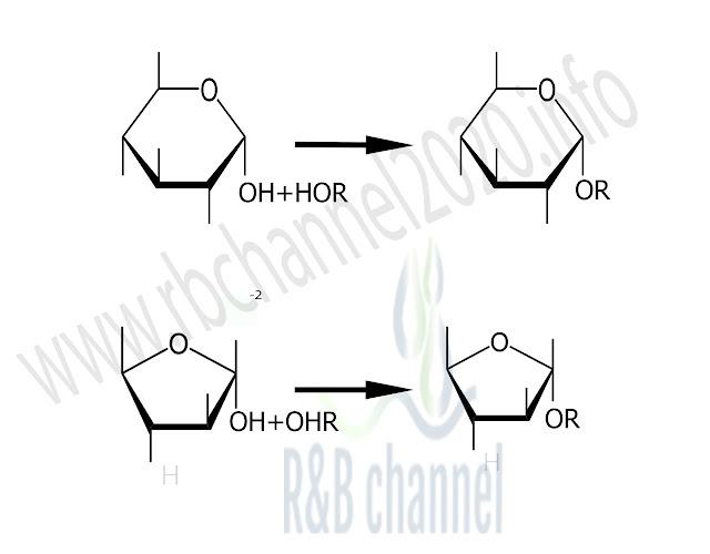 تشكيل الغليكوزيدات في السكريات الاحادية