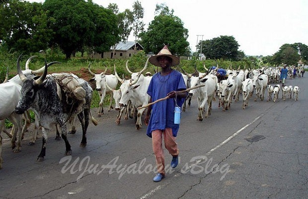 Miyetti Allah to herdsmen: Remain where you are and defend yourselves