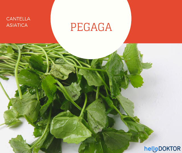 Pegaga