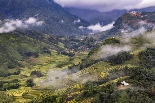 Sapa's beauty in ripe rice season