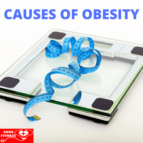 What Causes Obesity Why are you Obese