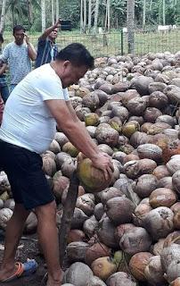 ODSK Mampu Tingkatkan Harga Jual Kopra Ditingkat Petani Menjadi Rp 8.000/kg