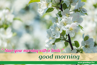 start your morning with smile! Good morning message with small white flowers