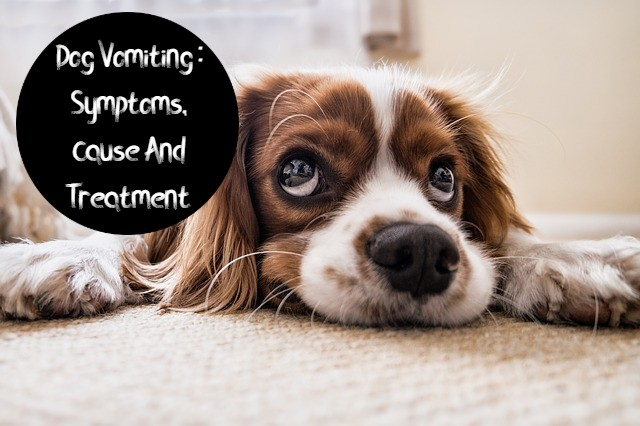 dog vomiting treatment home in hindi