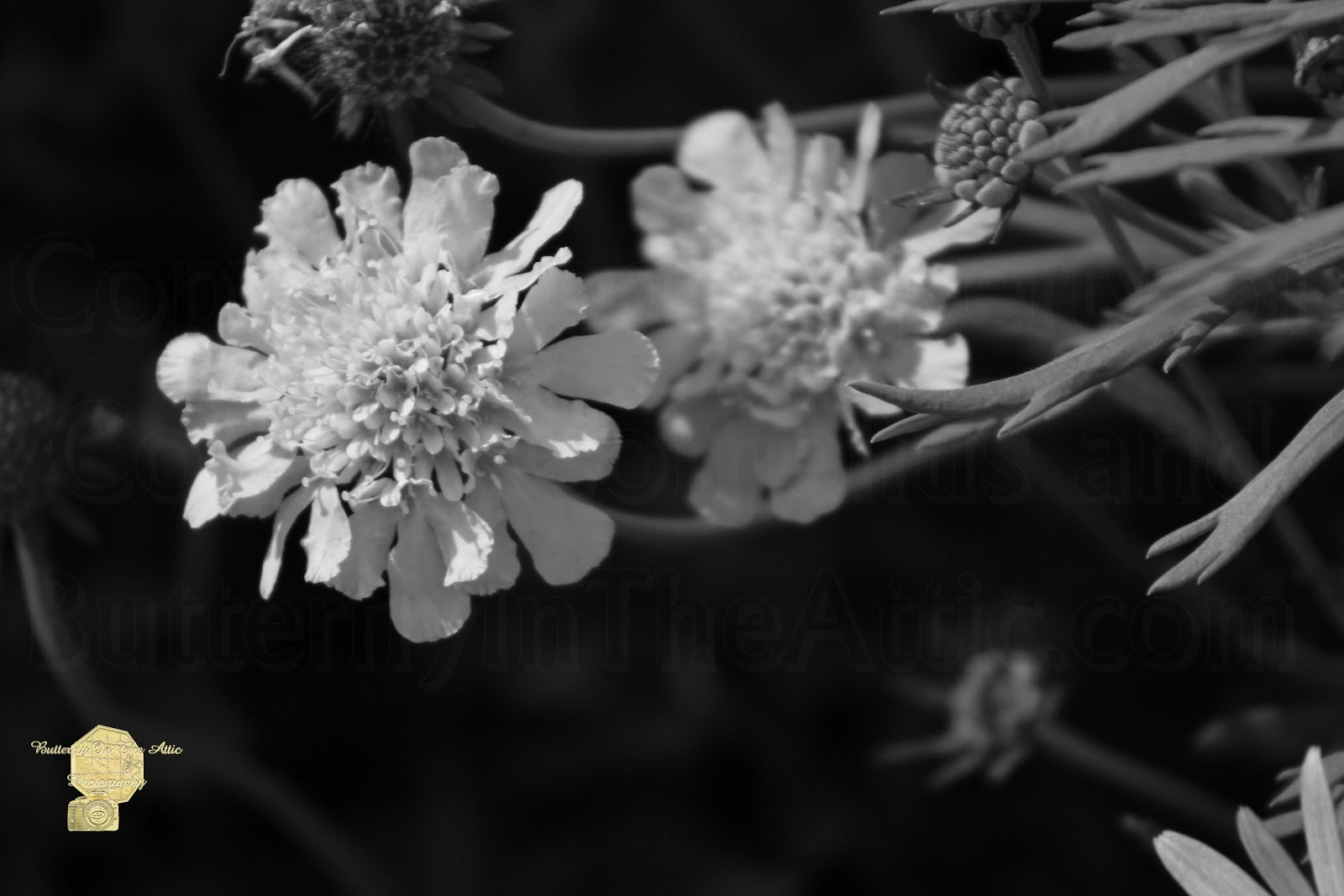 Photography By Colleen On Pixels Black White Butterflyintheattic