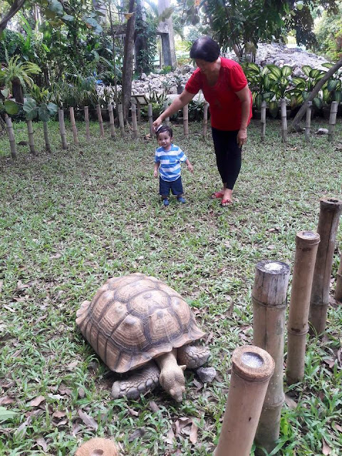 Tour in Cebu stop: A tortoise at Crocolandia Park