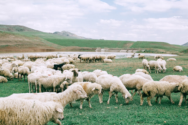 Source of Wool and its uses
