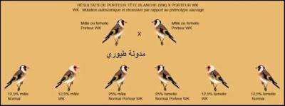 علم الطفرات عند الحسون (شرح كيفية حدوث الطفرات و اختلافها مع الصور ) الجزء الأول