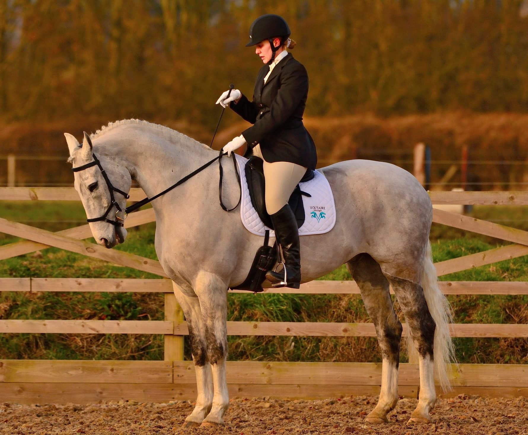 Team Tunnah Equestrian - How to Learn a Dressage Test