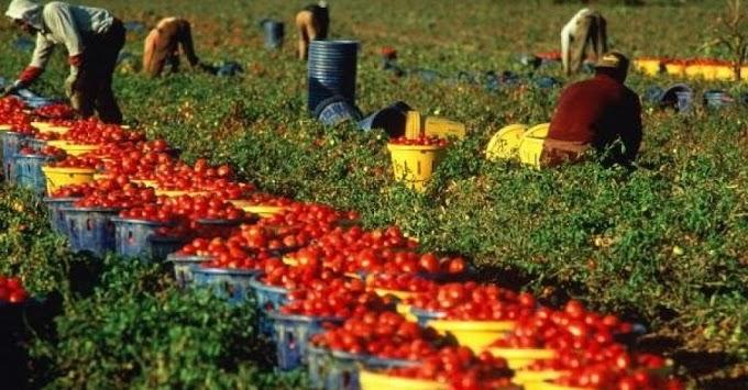 Caporalato: arrestati imprenditori e sequestrate aziende agricole