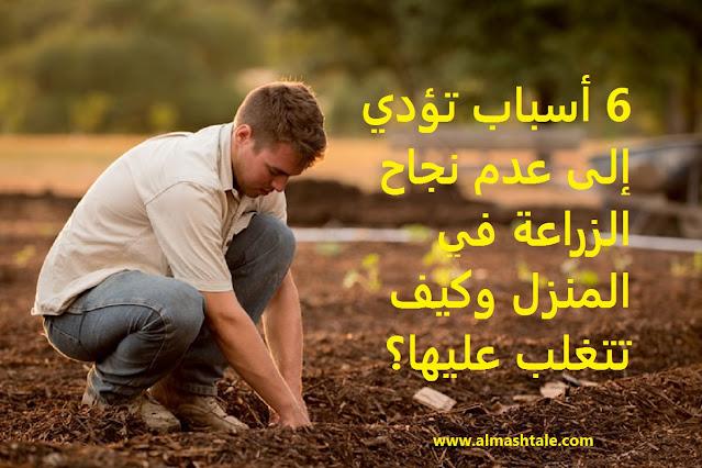 نجاح الزراعة في المنزل
