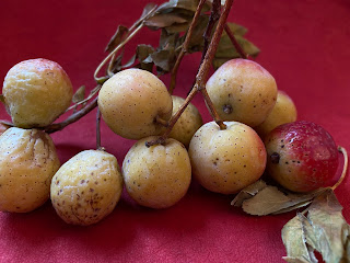 Sorbus domestica fruit and stems