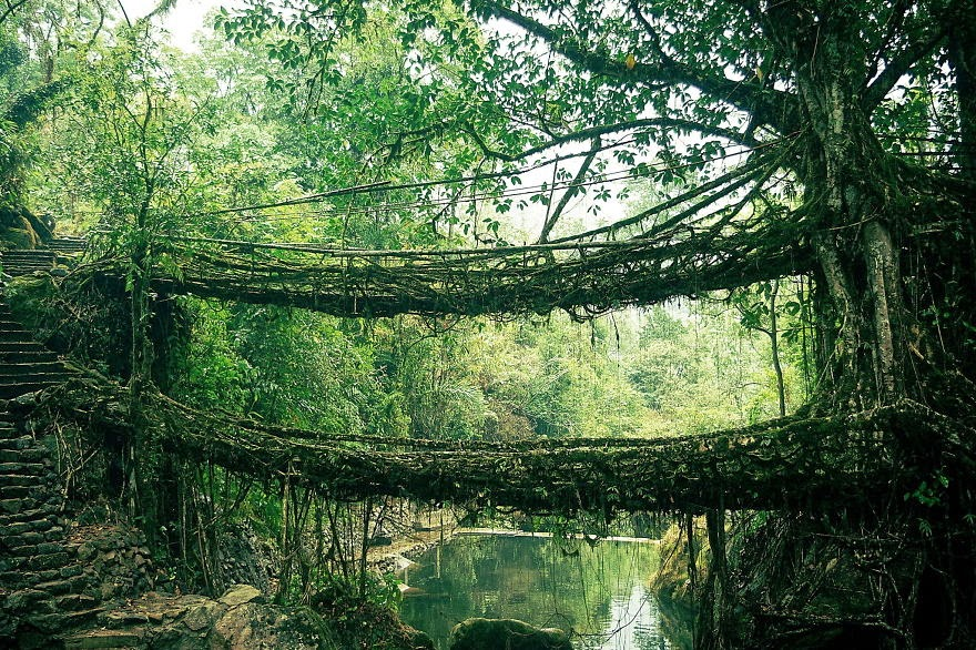 Root Bridge in India - 20 Mystical Bridges That Will Take You To Another World