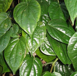 http://petua-warisan-kita.blogspot.my/