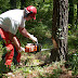 Safety Clothing To Wear When Operating A Chainsaw