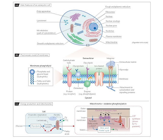 Cells, Membranes And Organelles