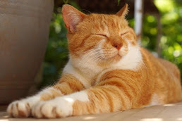Top 7 Facts You Don't Know About Cats