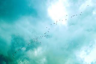 Oiseaux en route vers le sud