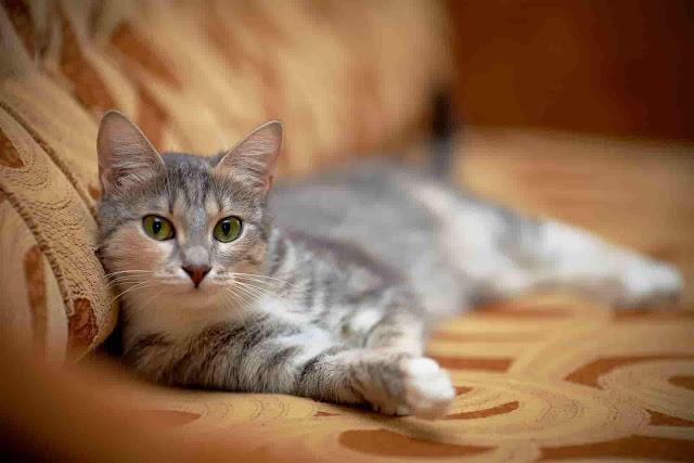 سعادة القطط,كيف تجعل القطط سعيدة