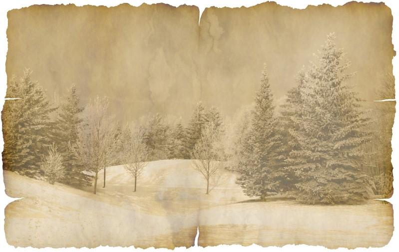 Tannenbäume im Winter