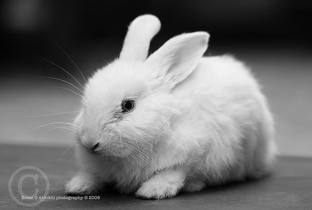 Cute White Baby Rabbits Wallpapers The Gorgeous Princess Gt Gt Rabbit Wabbit