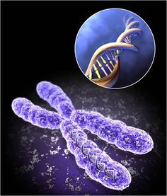 telomer.jpg