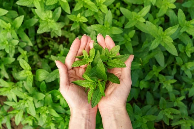 The amazing benefits of green mint leaves