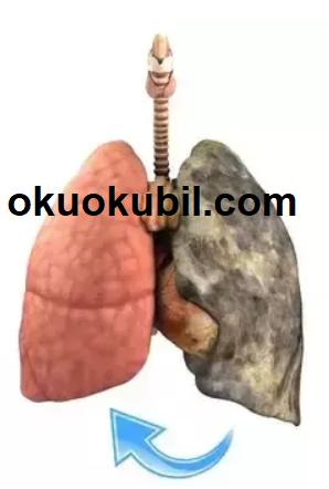 Ciğerlerimiz doğal olarak Nasıl temizlenir? Ciğerlerin temizlenmesi için 6 Önemli İp Ucu.