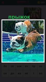 две собаки совершают прыжок через сетку в воду