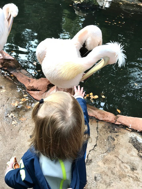 Tjelle mit Pelikan