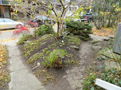 Toronto Fall Cleanup Riverdale Front Garden After by Paul Jung Gardening Services--a Toronto Gardening Services Company