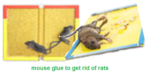 How Do I Get Rid Of Rats Naturally