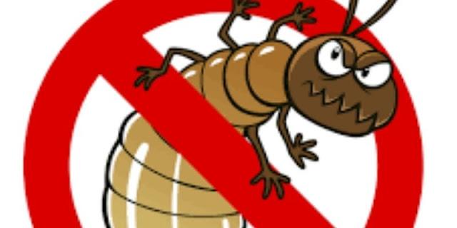 anti rayap