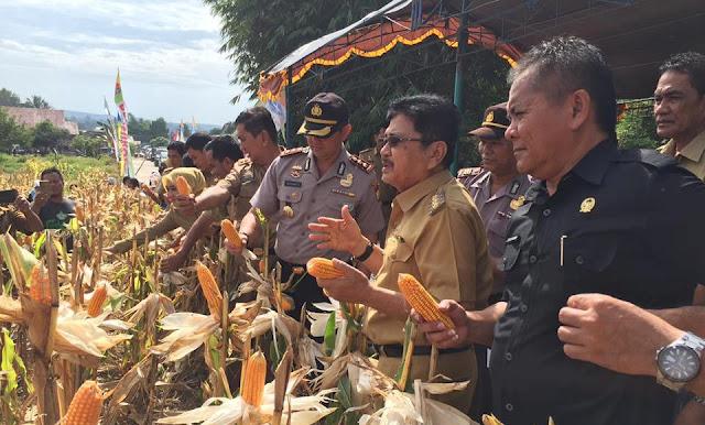 Wali Kota Panen Jagung Perdana, Telah Bantu 21,25 Ton Benih Untuk 40 Poktan