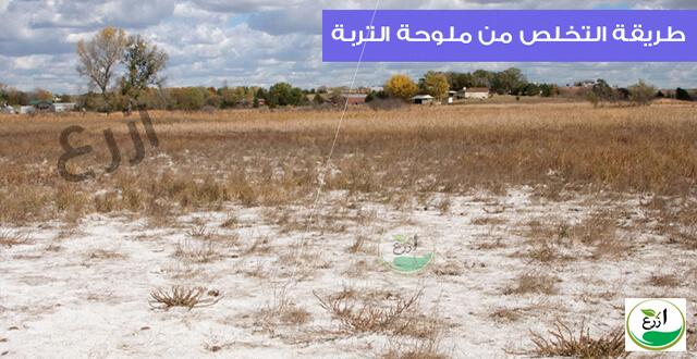 طريقة التخلص من ملوحة التربة