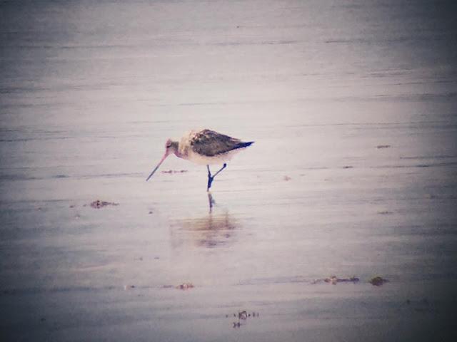 Migratory Birds in Olango Island