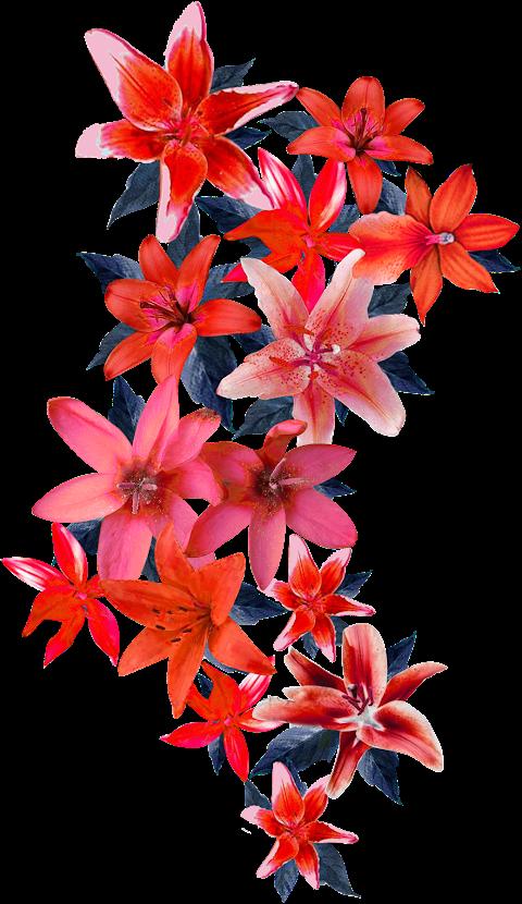 Vector flower design 2314.png