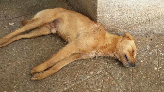 I cani sarebbero morti a causa di veleno per lumache