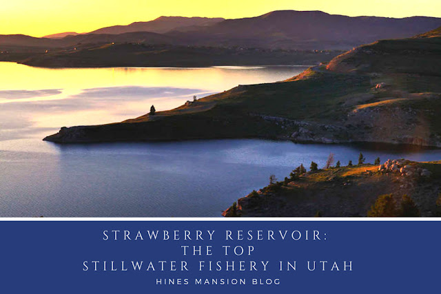 Strawberry Reservoir: The Best Stillwater Fishing in Utah blog cover image