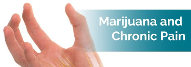 Cannabis For Sale Was The Best Thing I Could Ever Search For Chronic Pain And Cancer Treatment