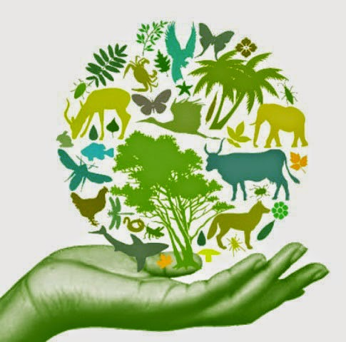 Biodiversity Essay