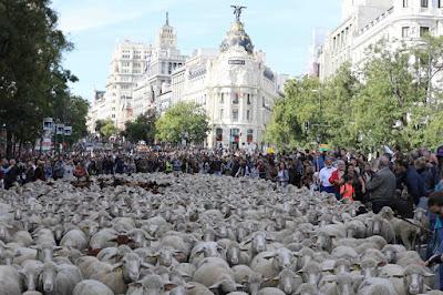 https://es.wikipedia.org/wiki/Archivo:La_Fiesta_de_la_Trashumancia_vuelve_otra_vez_a_Madrid_(02).jpg
