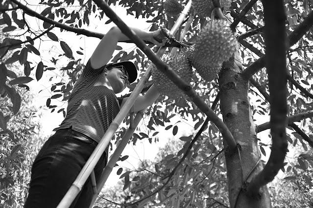 Mùa trái cây quê em