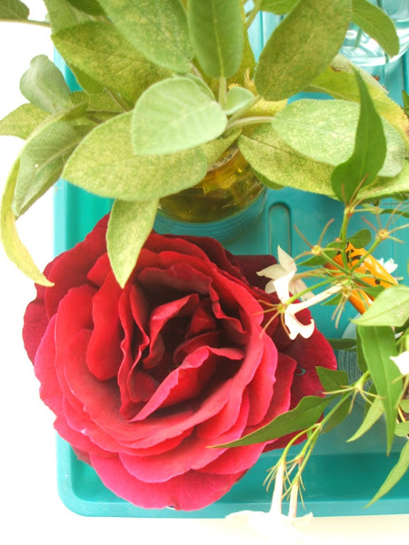 rose, sage and jasmine used in nursing home sensory activity